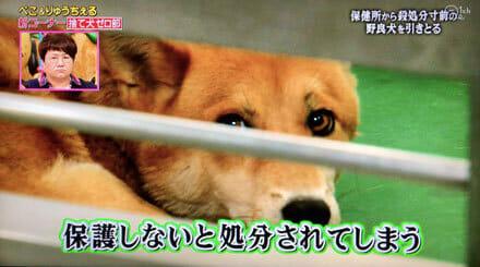 捨て犬ゼロ部